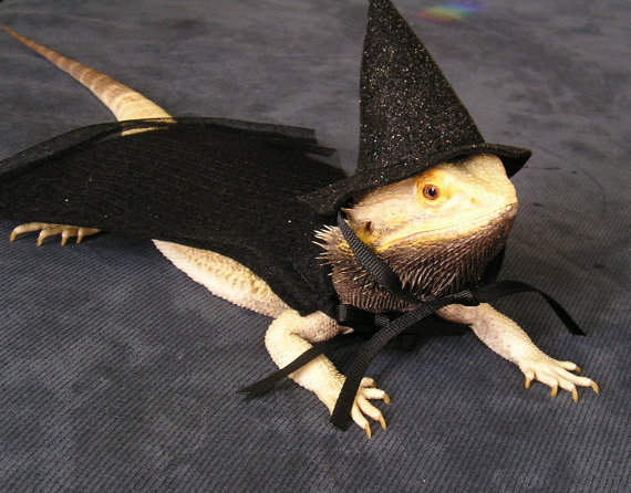 Also Click here for the costume artistu0027s blog and Bearded Dragon Rescue! & Pampered Beardies